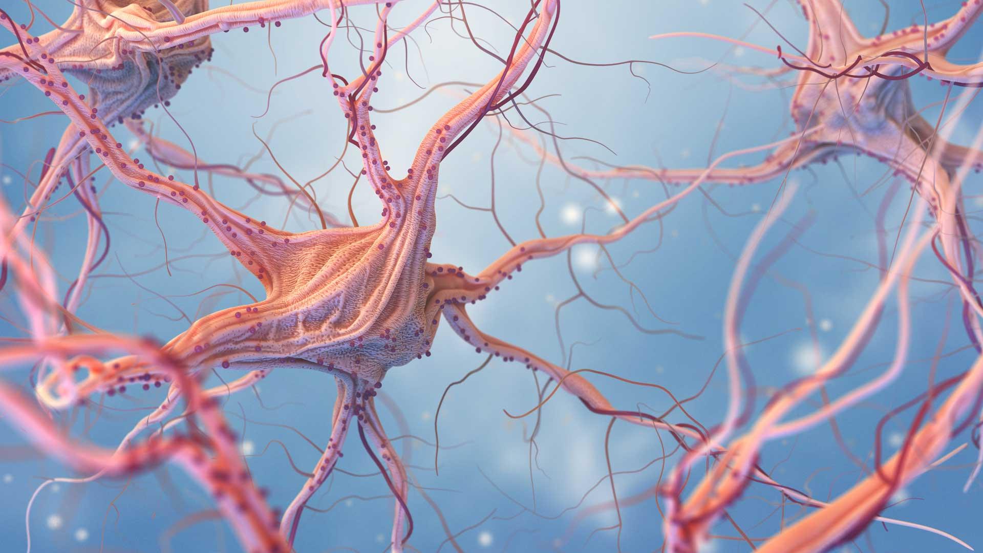 Neuroxeirourgio